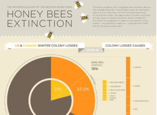 bee extinction