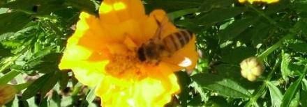 Bettine Bees 3