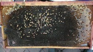 Just a few bees on the frame, where once there were many.